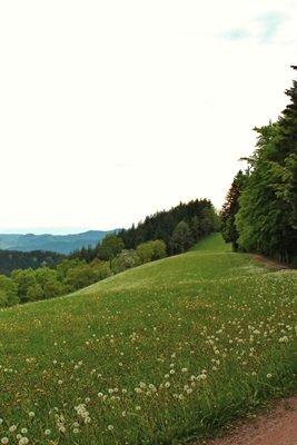 Premiumwanderweg OBerharmersbach