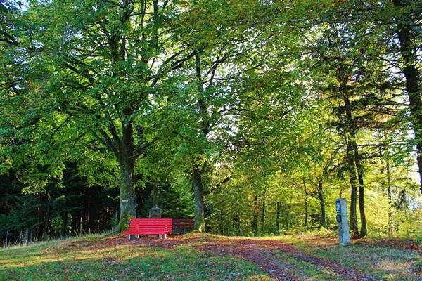Urlaub im Schwarzwald Erlebnisse wandern Oberharmersbach Beim Kreuz