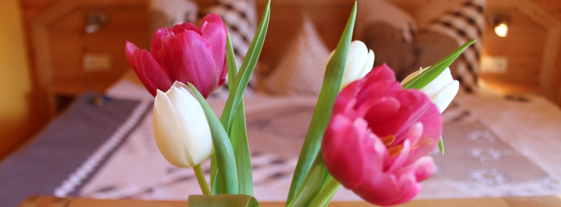 Hirschstube Tulpen Traumstube