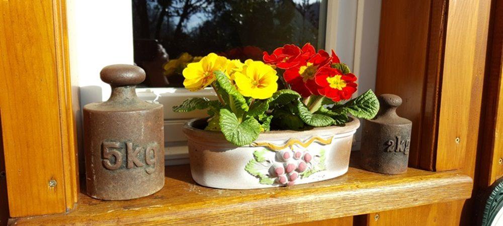 Jägiblog Batzeli und Frühjahrsputz