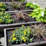 Blumenkästen für die Terrasse