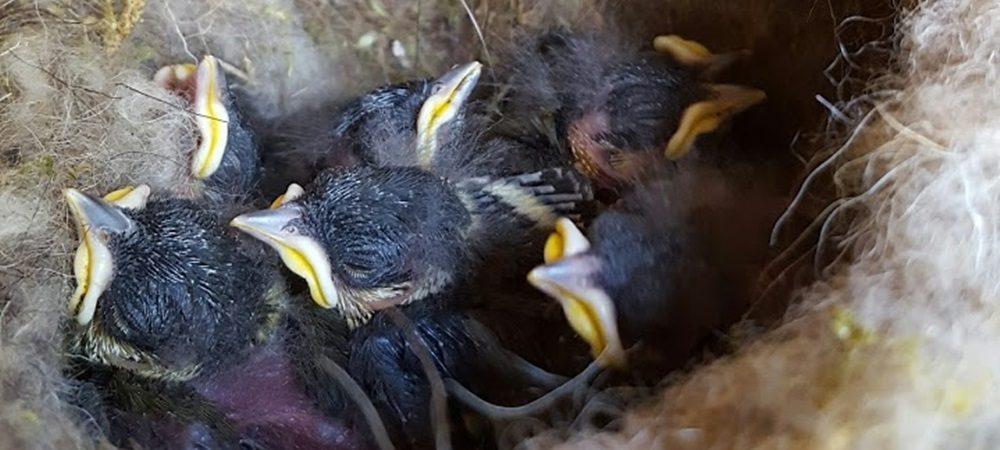 Jägiblog Meisenbabys im Garten vom Jägerstüble