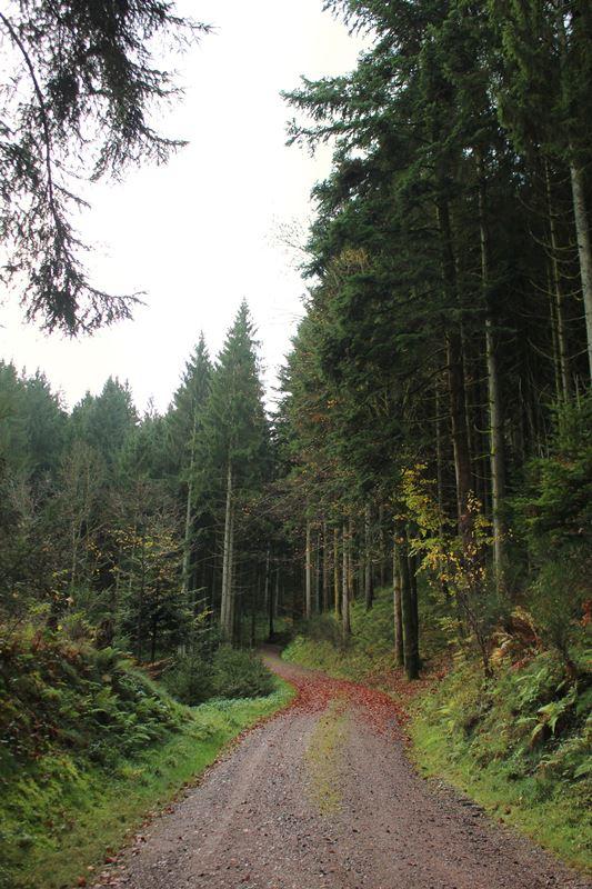 Wanderweg auf die Hark vom Jägerstüble aus.